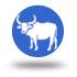 icono bufalo