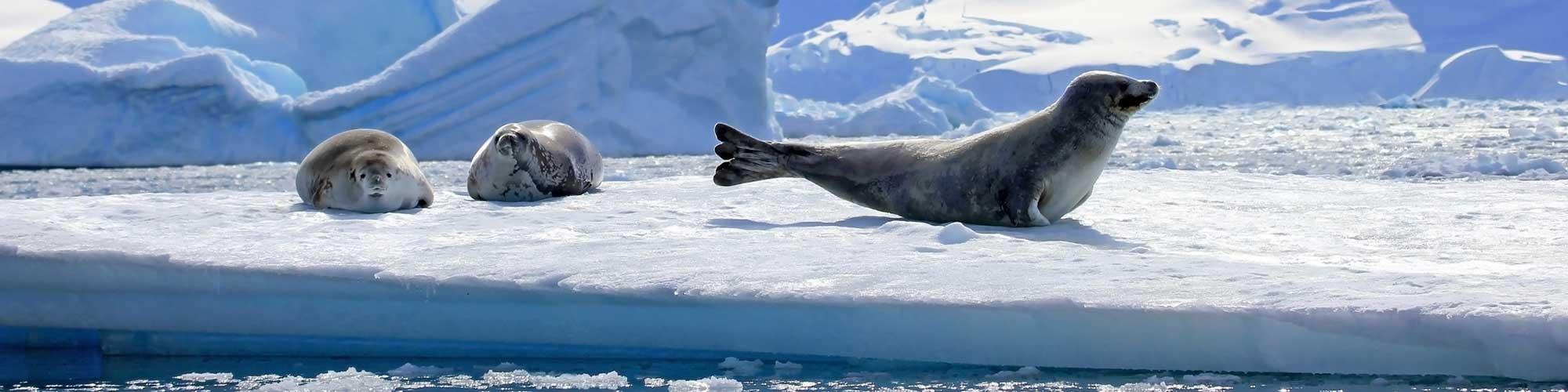 Antártida, un viaje a otro mundo - El Pais Viajes