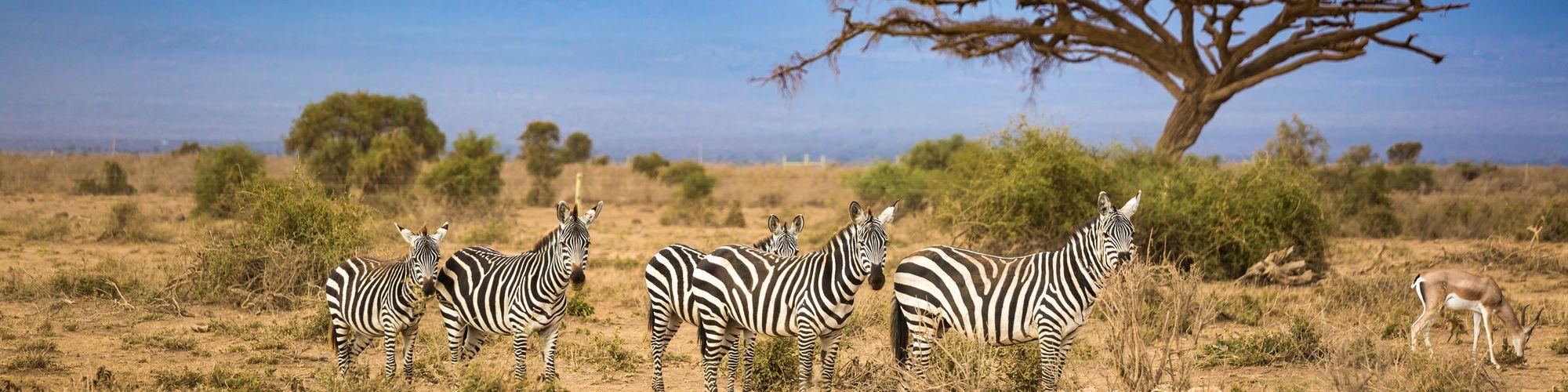 Aventura en Botswana y Cataratas Victoria - EL PAIS Viajes