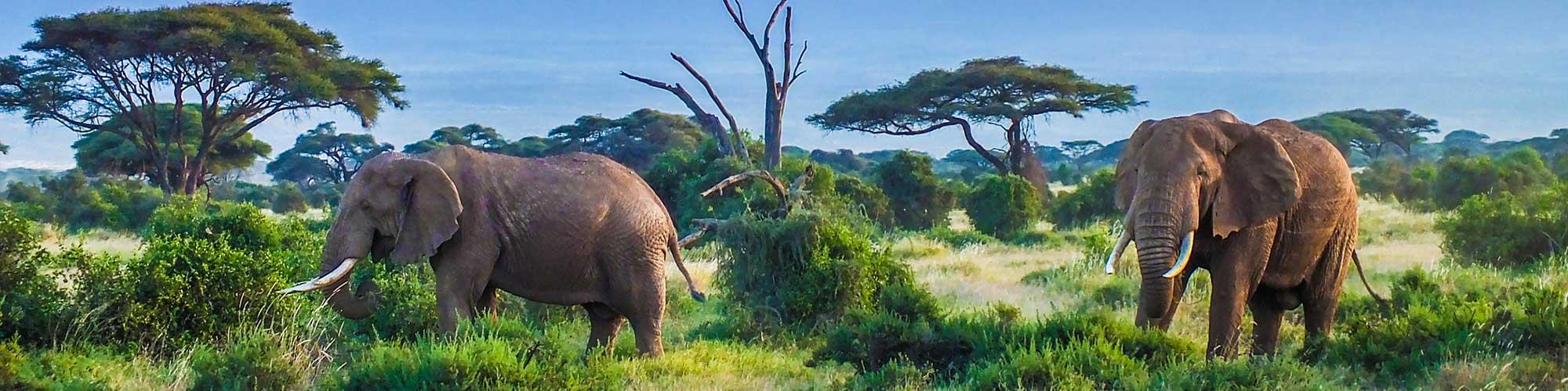 Al pie del Kilimanjaro - EL PAÍS Viajes