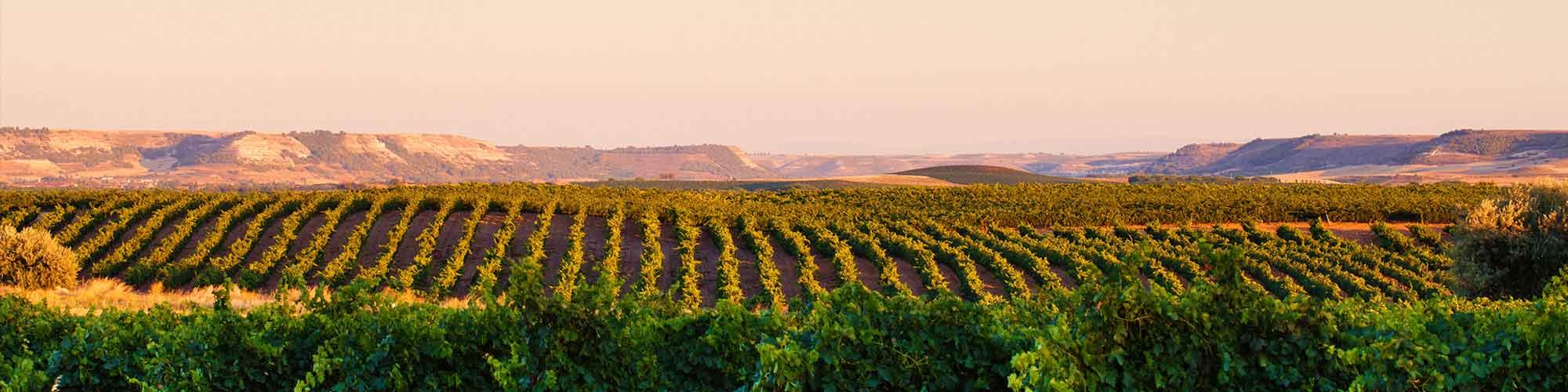 Ruta del vino por la Ribera del Duero - EL PAÍS Viajes