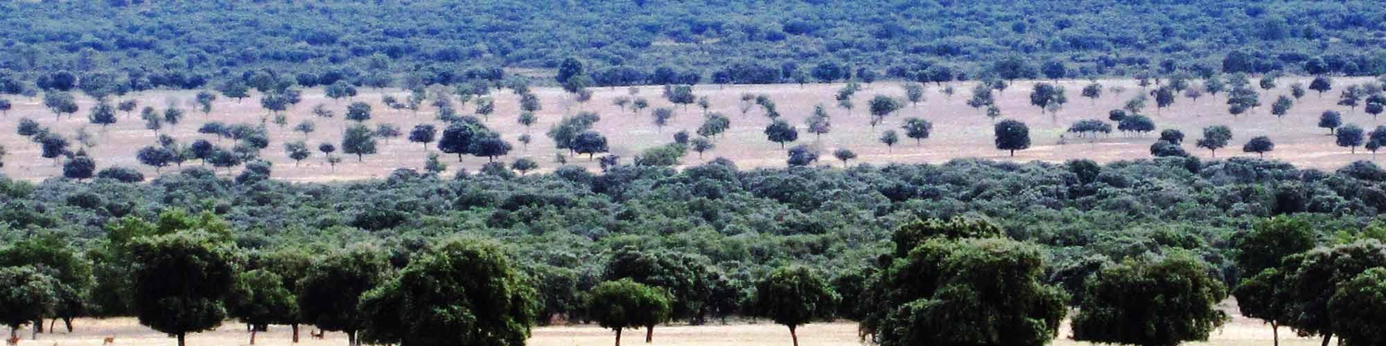 Un viaje al Serengueti Español - EL PAIS Viajes