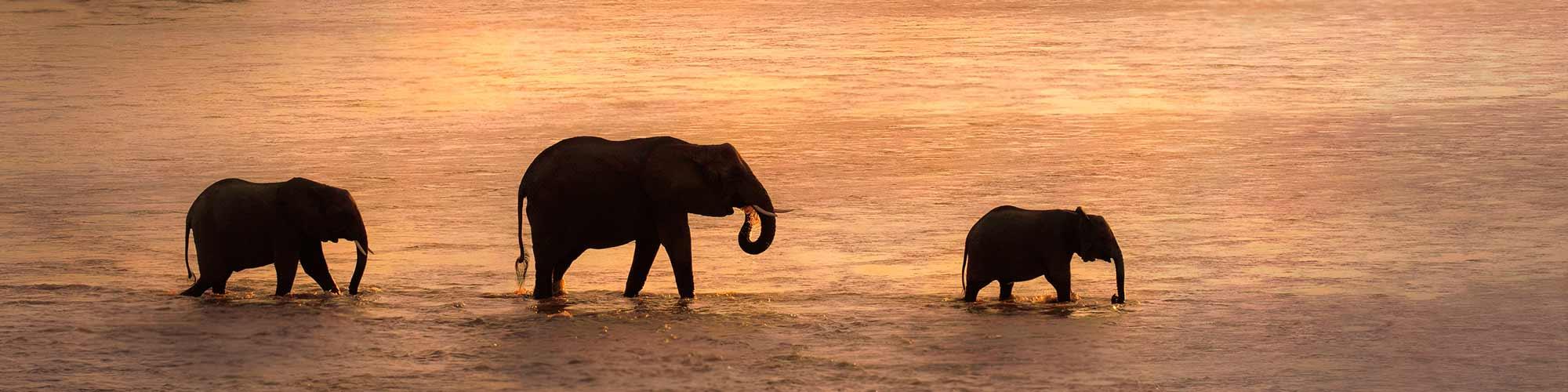 Un crucero diferente: África Austral  - El Pais Viajes