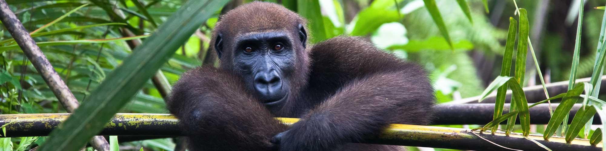 Gabón: Una exploración a la selva ecuatorial - El Pais Viajes