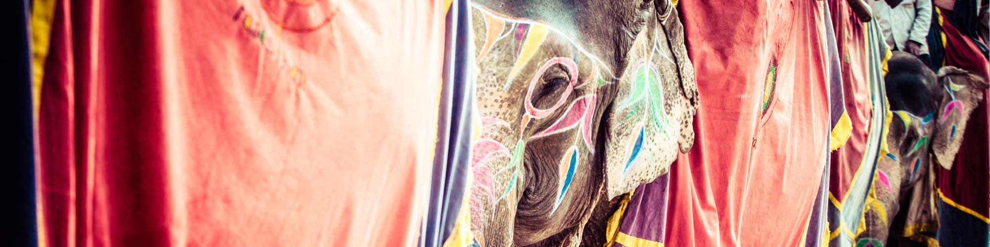 Viaje India, Templos y Tigres - EL PAIS Viajes