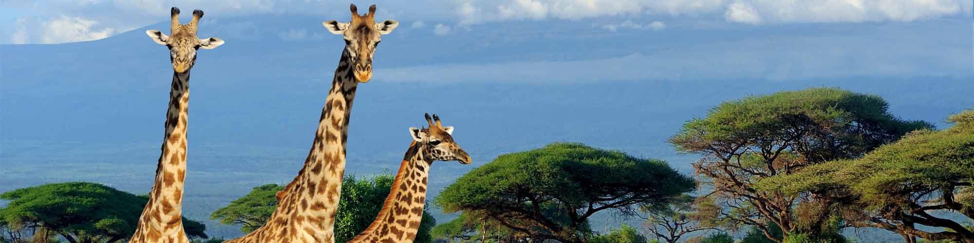 Kenia, memorias de África