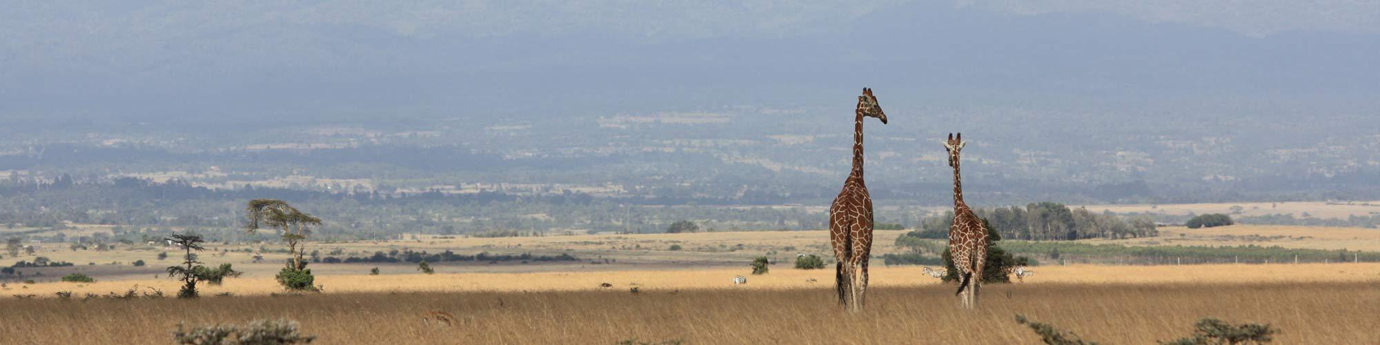 Kenia, memorias de África - EL PAIS Viajes