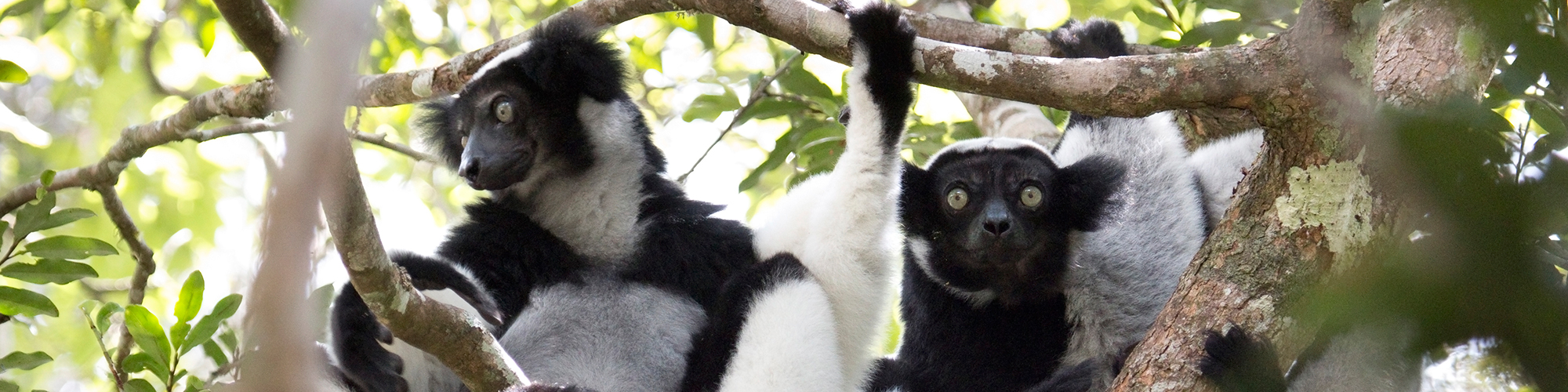 Madagascar, un mundo diferente - El País Viajes