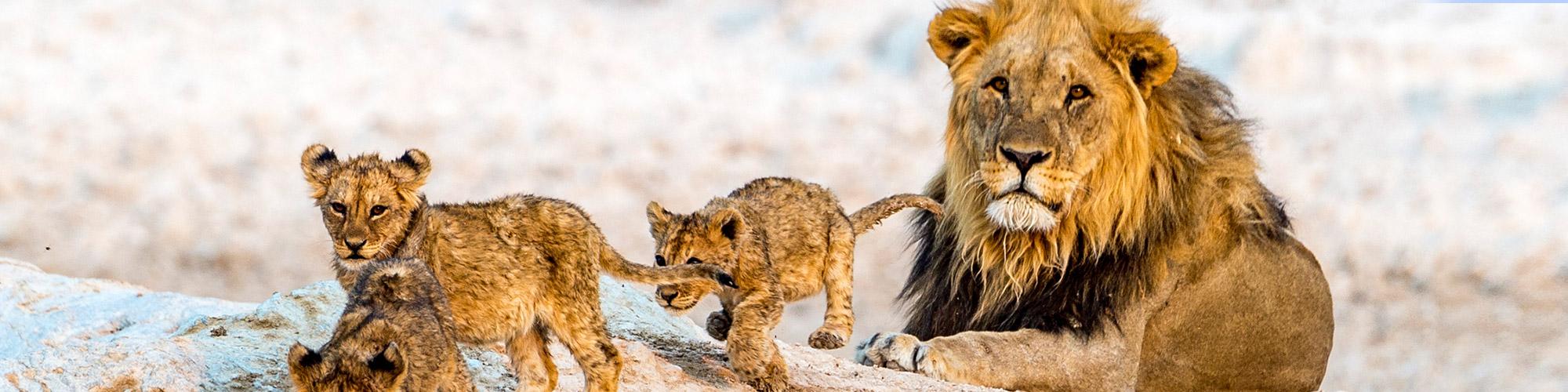Aventura en Namibia - EL PAIS Viajes