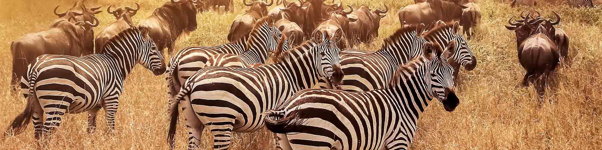 Tanzania y Zanzíbar: Encuentros salvajes - EL PAIS Viajes